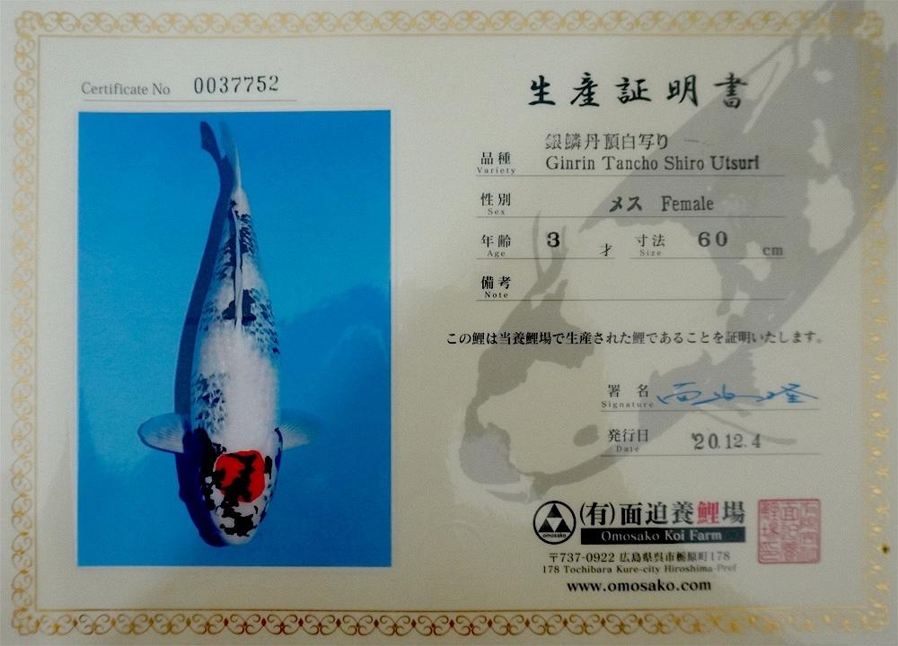 Ginrin Tancho Showa 20200038 2